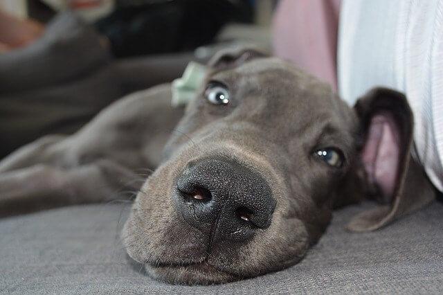 sleepy dog on the floor